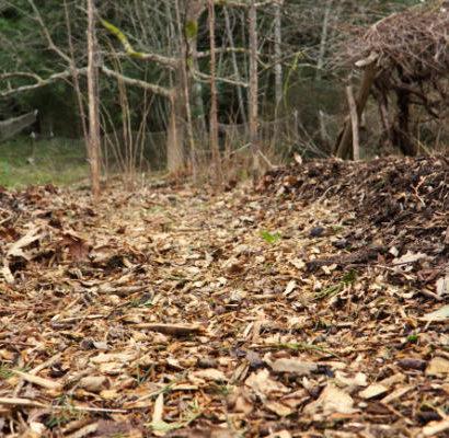 Wood Chip Pathways